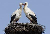 kochamy_ptaki_w_swiecie_bocianow_000